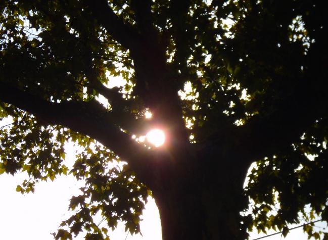 SunCameOut.JPG