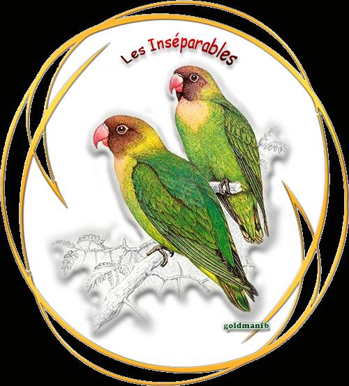 http://static.blog4ever.com/2012/09/713297/Les-Inseparables.png