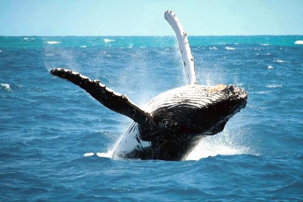 reykjavik-whales.jpg