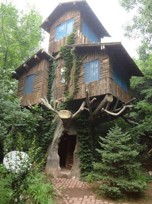 Tree House Marin California.jpg