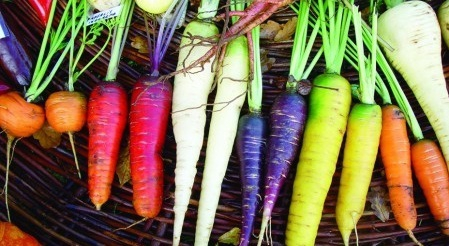 carottes variétés.jpg