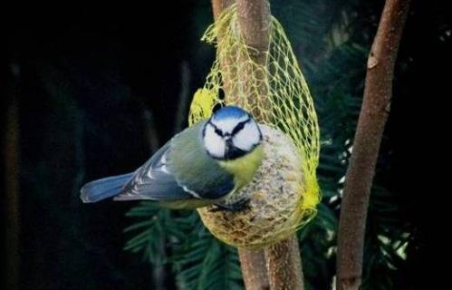 Oiseaux des Cèdres 10.jpg