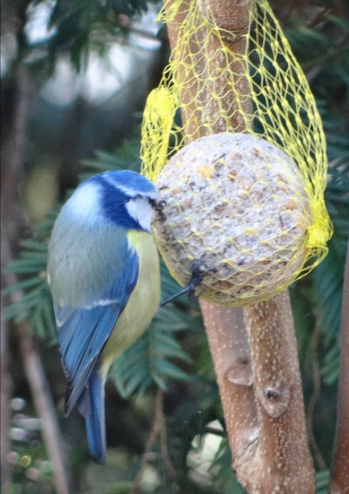 Oiseaux des Cèdres 07.jpg