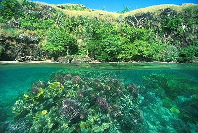 Papouasie Nouvelle Guinée 02.jpg