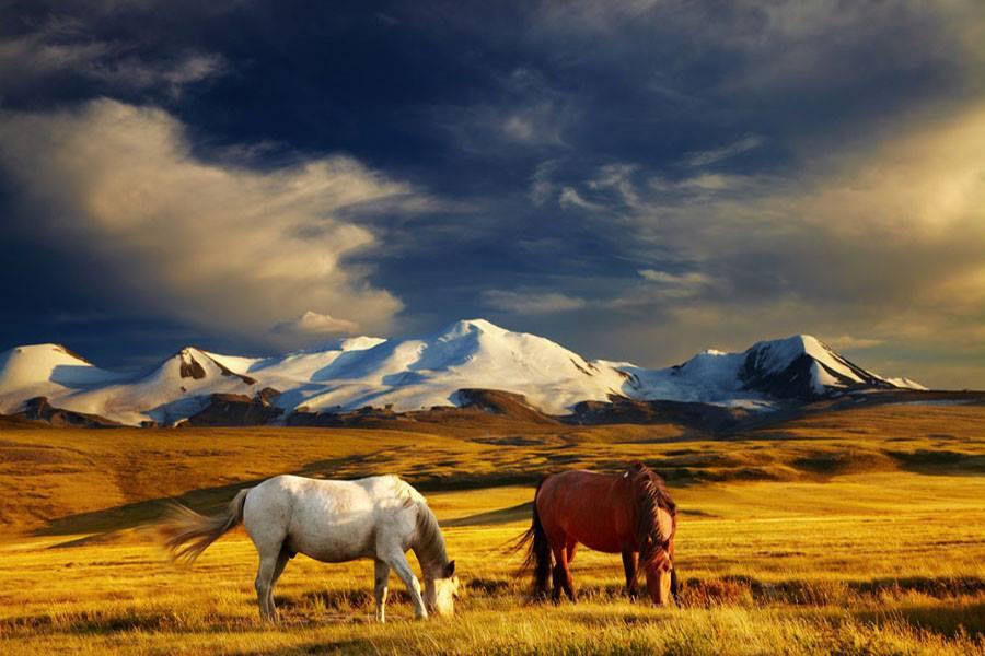Mongolie 14.jpg