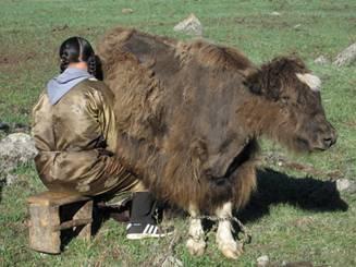 Mongolie 10.jpg