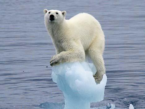 ours-polaire-al-gore.jpg