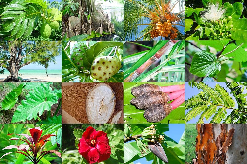 origine-des-plantes-tahiti-heritage.jpg