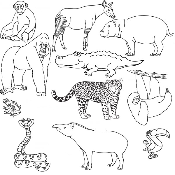 coloriage-animaux-sauvages-17959.jpg