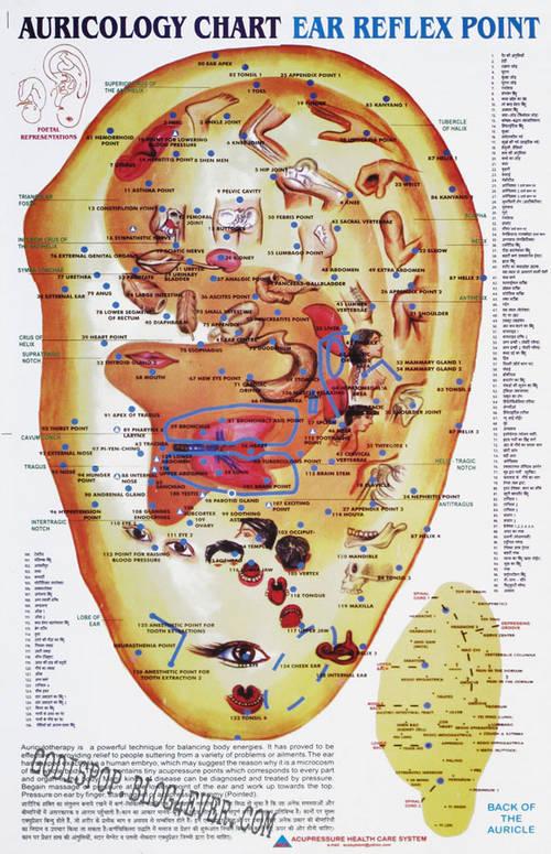 BB Auricology chart.jpg