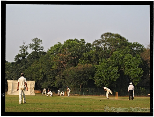 Small 23 IMG_7091 Cricket.jpg
