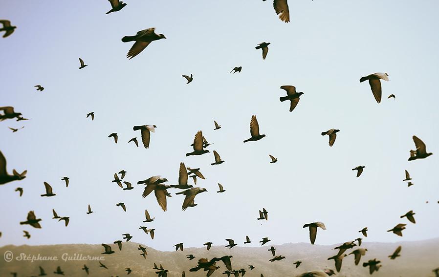 IMG_0053 Nuée d'oiseaux Pushkar lake SMALL.jpg
