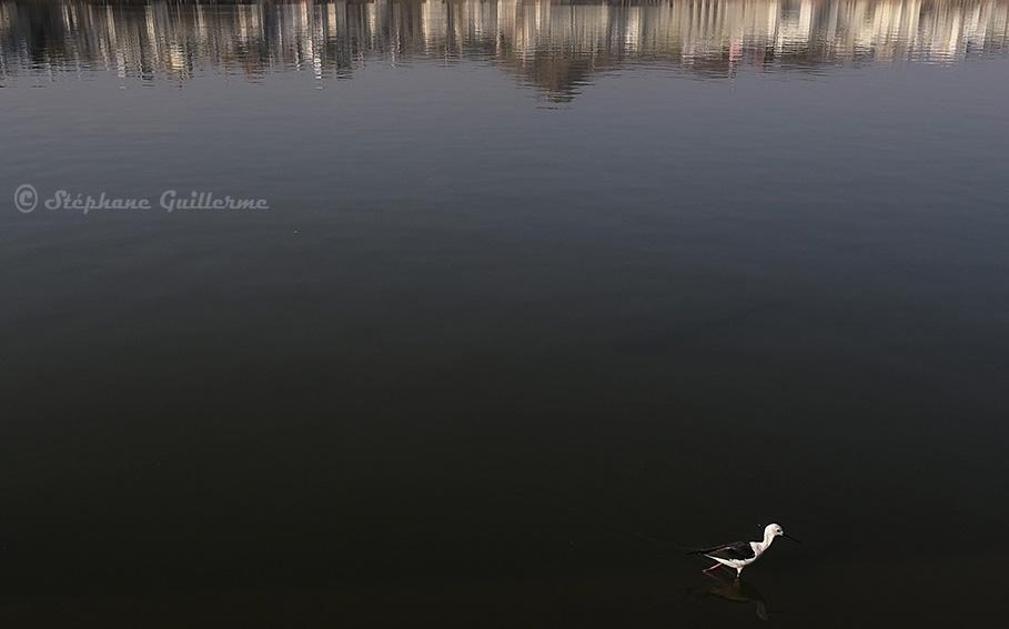 IMG_0093 Oiseau Puskhar lake SMALL.jpg
