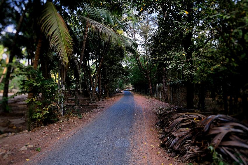 IMG_1057 Route forêt Diu island Small.jpg