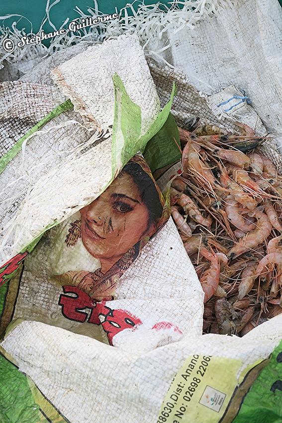 IMG_1320 Sois belle et crevettes Vanakbara Small.jpg
