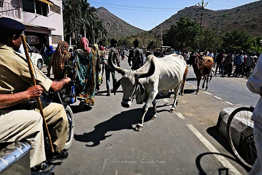 IMG_2743 La route la vache Shiva ratri Junagadh Small.jpg