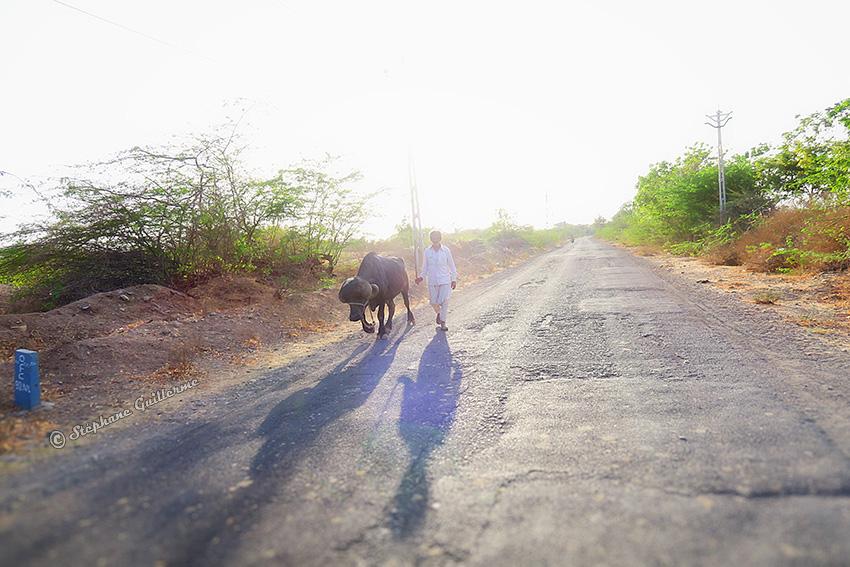 IMG_3537 Homme et buffalo sur route. Vers Porbandar Small.jpg