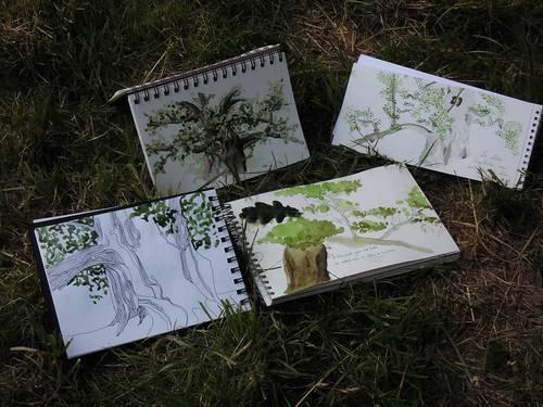 4 arbres à 4 façons.JPG