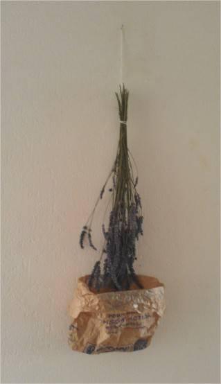 Faire ses propres sachets de lavande l 39 apprenti ecolo - Quand couper les fleurs de lavande ...