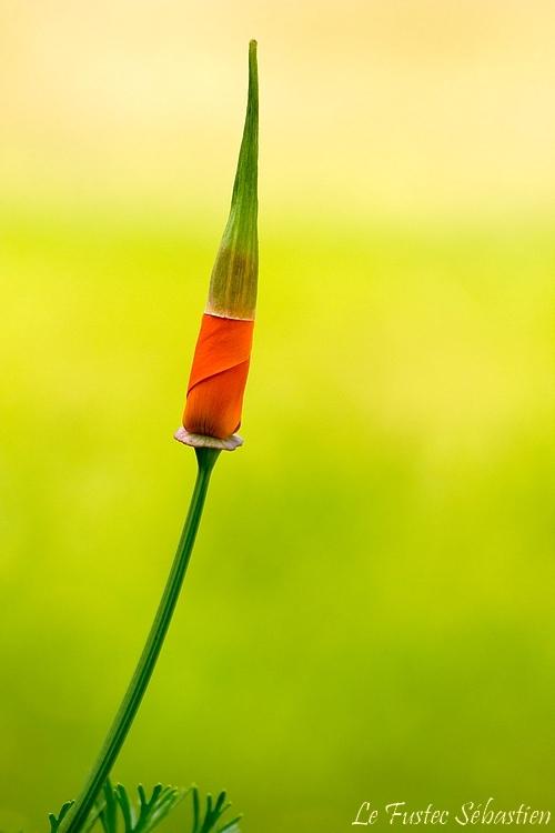 fleur.wblog.jpg