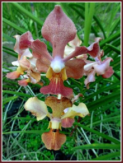 ferme orchidées (20).JPG