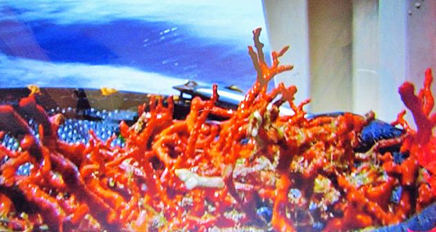2. corail.JPG