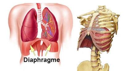 ob_fe7c6a_diaphragme2.jpg