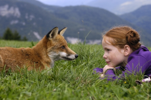 le-renard-et-l-enfant-le-renard-et-l-enfant-the-fox-and-the-child-12-12-2-8-g.jpg