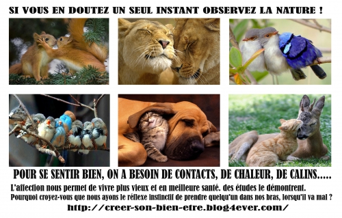 animaux copie.jpg