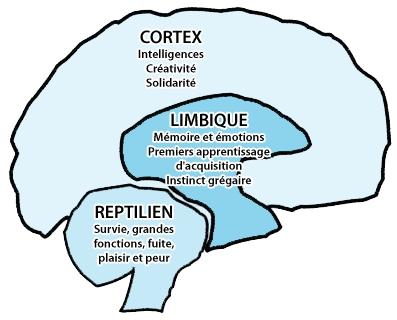 cerveau-reptilien-limbique-cortex-.jpg