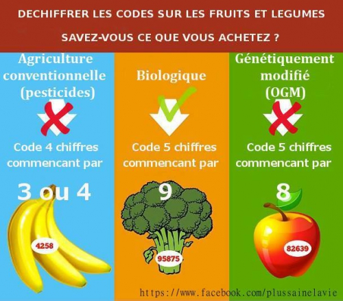 code fruit leg.jpg