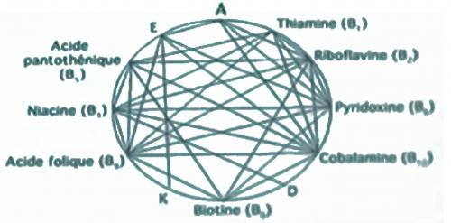 interaction entre les enzymes.jpg