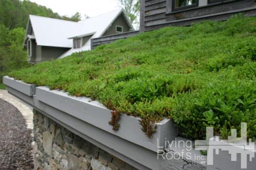 toit-vegetal-livingroofsinc.com_.jpg
