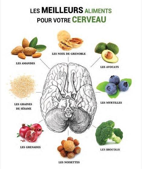 Aliment CERVEAU.jpg