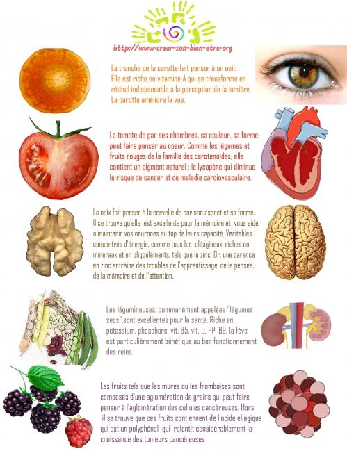 aliments physionomie et propriété copie.jpg