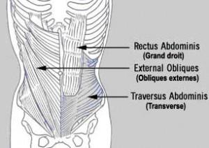 muscles profonds.jpg