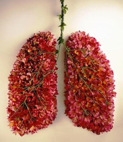 poumon.jpg