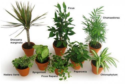 plantes dépol.jpg