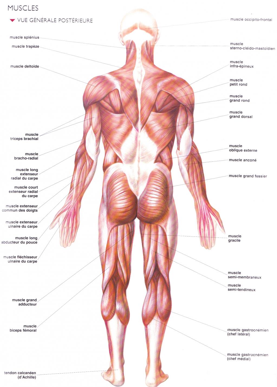 La douleur du côté du dos entre les omoplates et il est difficile de respirer