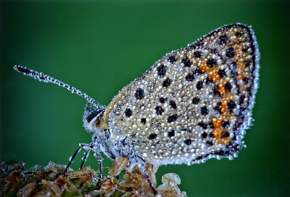 insectos-rocio2-a.jpg