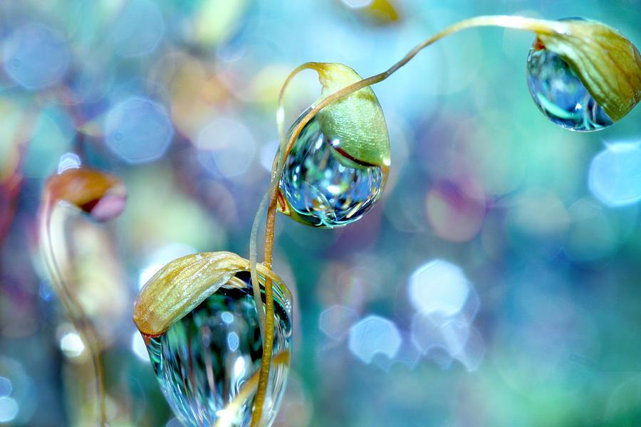 rainbow-moss-drops-sharon-johnstone.jpg