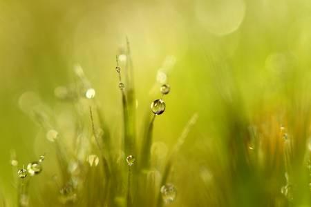Sunshine-Moss.jpg