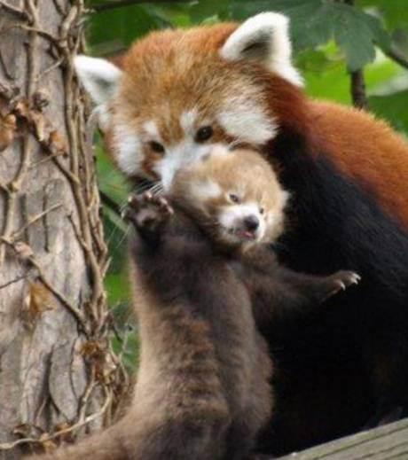 maman+bébé.jpg