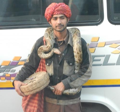 Voyage en Inde serpent 535.JPG