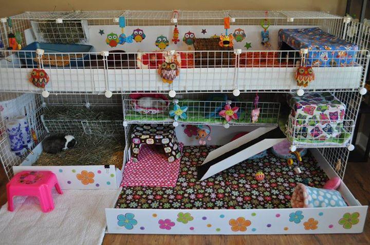 construire une cavy cage le cochon d 39 inde. Black Bedroom Furniture Sets. Home Design Ideas