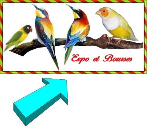 oiseauxexotiquecorrigé01.jpg
