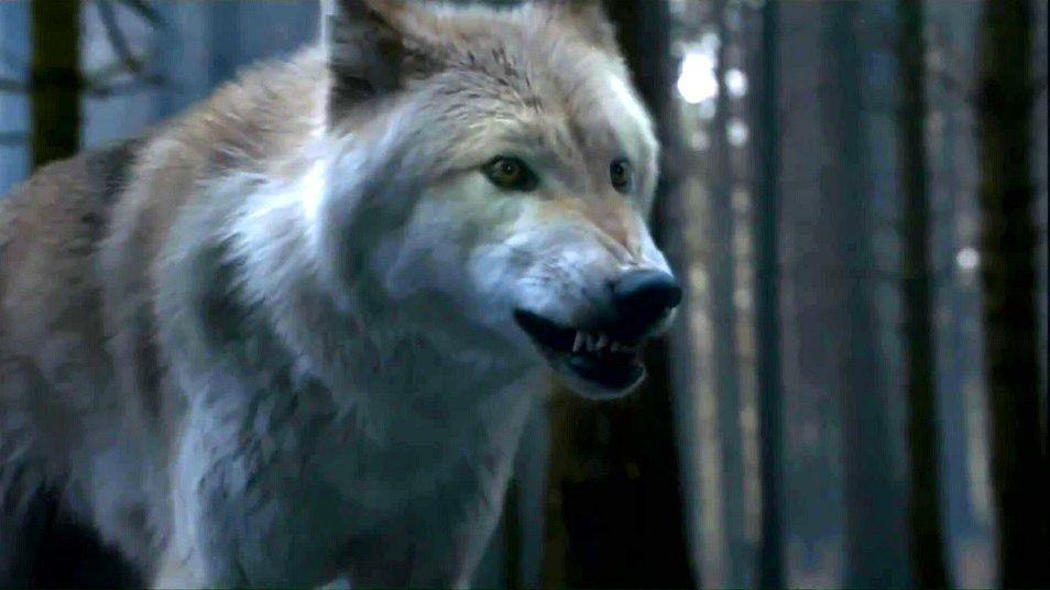 game-of-thrones-loups.jpg