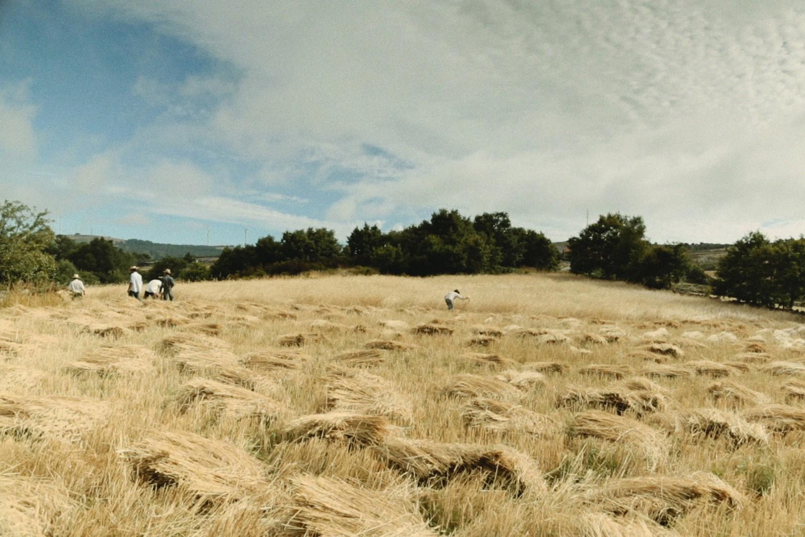 VoltaATerra-tt-width-1600-height-1067-fill-0-crop-0-bgcolor-eeeeee-nozoom_default-1-lazyload-1.jpg
