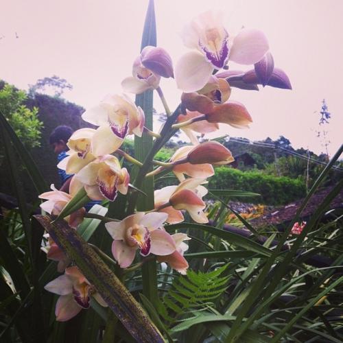 orchidées2.jpg