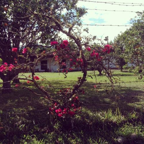 fleursbis.JPG